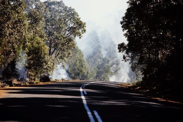 Australia Desserts Forest Forest Fire Smoke Nature Non-urban Scene Outbackaustralia Power In Nature Smoke Western Australia