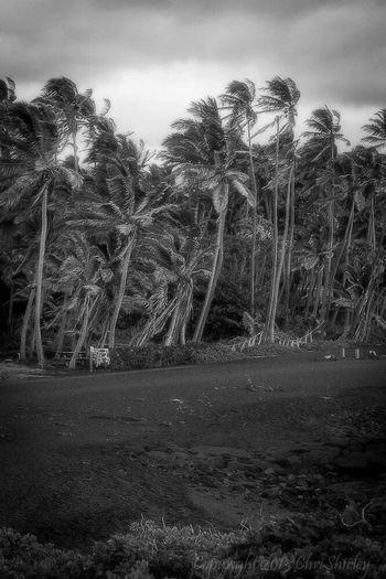 Punalu'u Black Sand Beach, Big Island, Hawai'i Blacksandbeach Southpoint