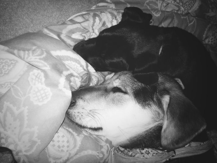 The hounds adore each other. ♡