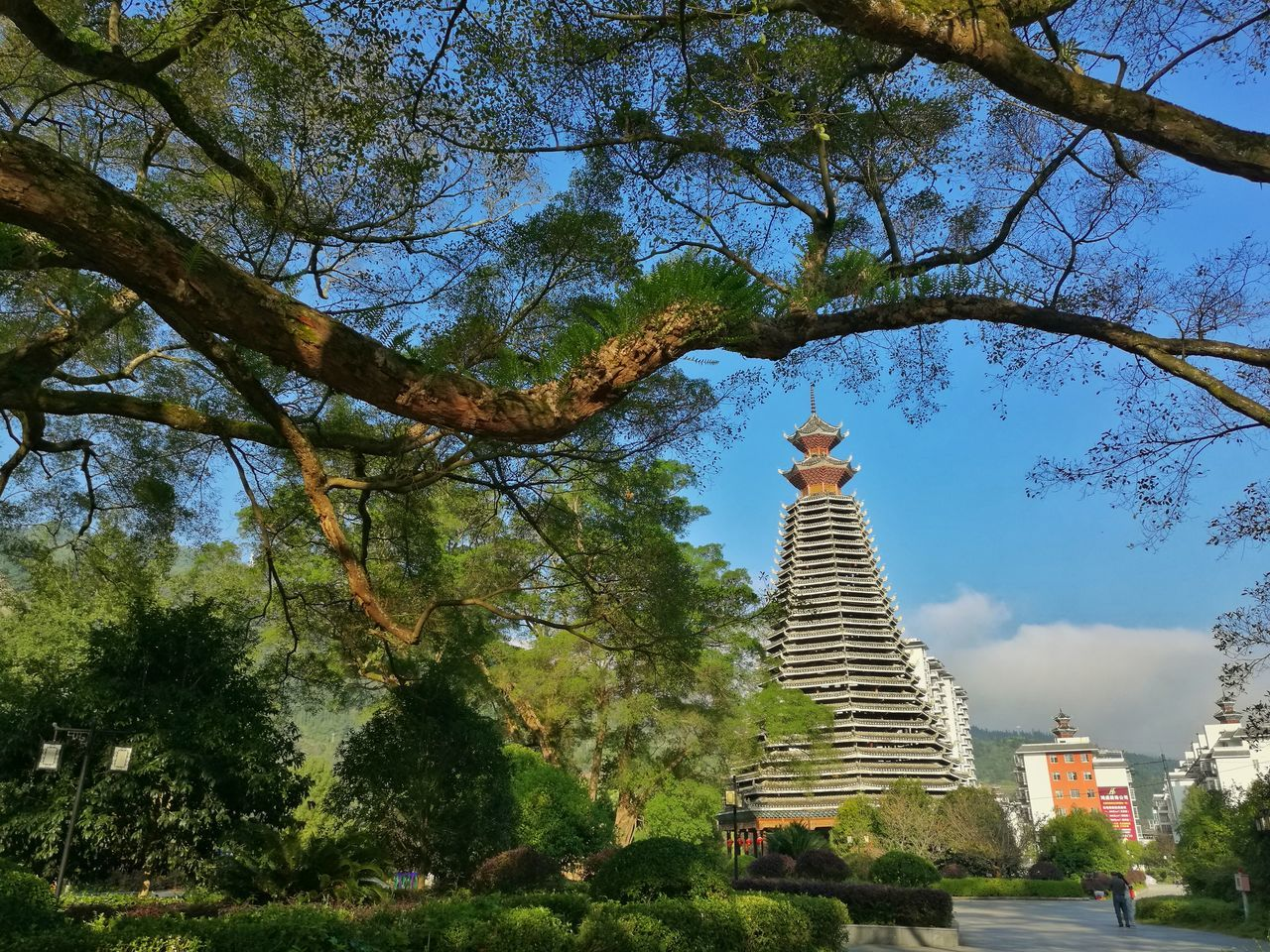 tree, religion, spirituality, architecture, travel destinations, place of worship, built structure, pagoda, low angle view, history, travel, tourism, building exterior, ancient, sky, nature, day, no people, outdoors, growth, statue, skyscraper, beauty in nature, ancient civilization