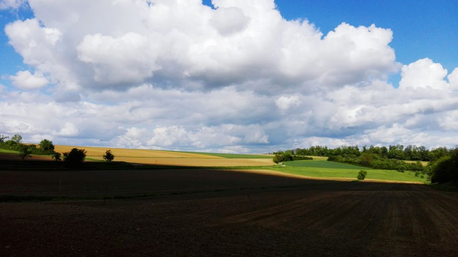 Sun And Shadow Cloud - Sky White Clouds White Clouds And Blue Sky Tree Rural Scene Tree Area Agriculture Field Sky Landscape Grass Cloud - Sky Cultivated Land Empty Road Agricultural Field Farmland Plantation Oilseed Rape