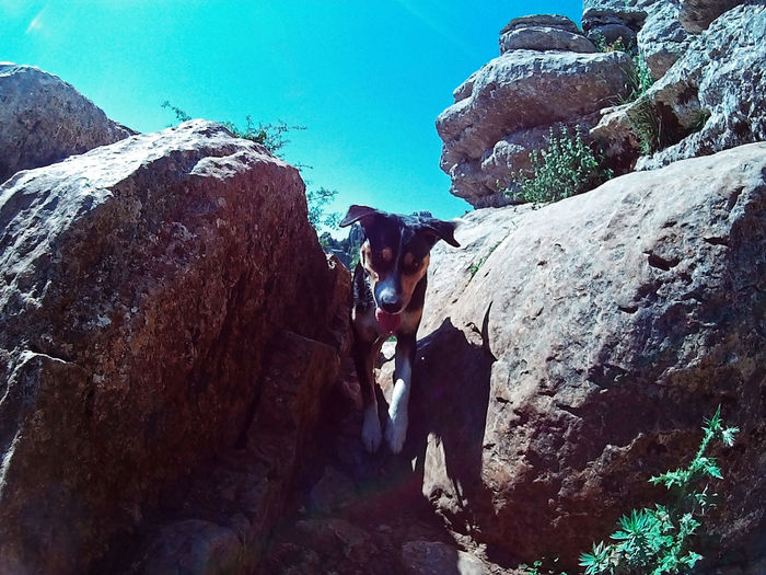 Dog Dogs Dogslife Nature Rock Sport Camera Dogslover Dogslovers Mountain