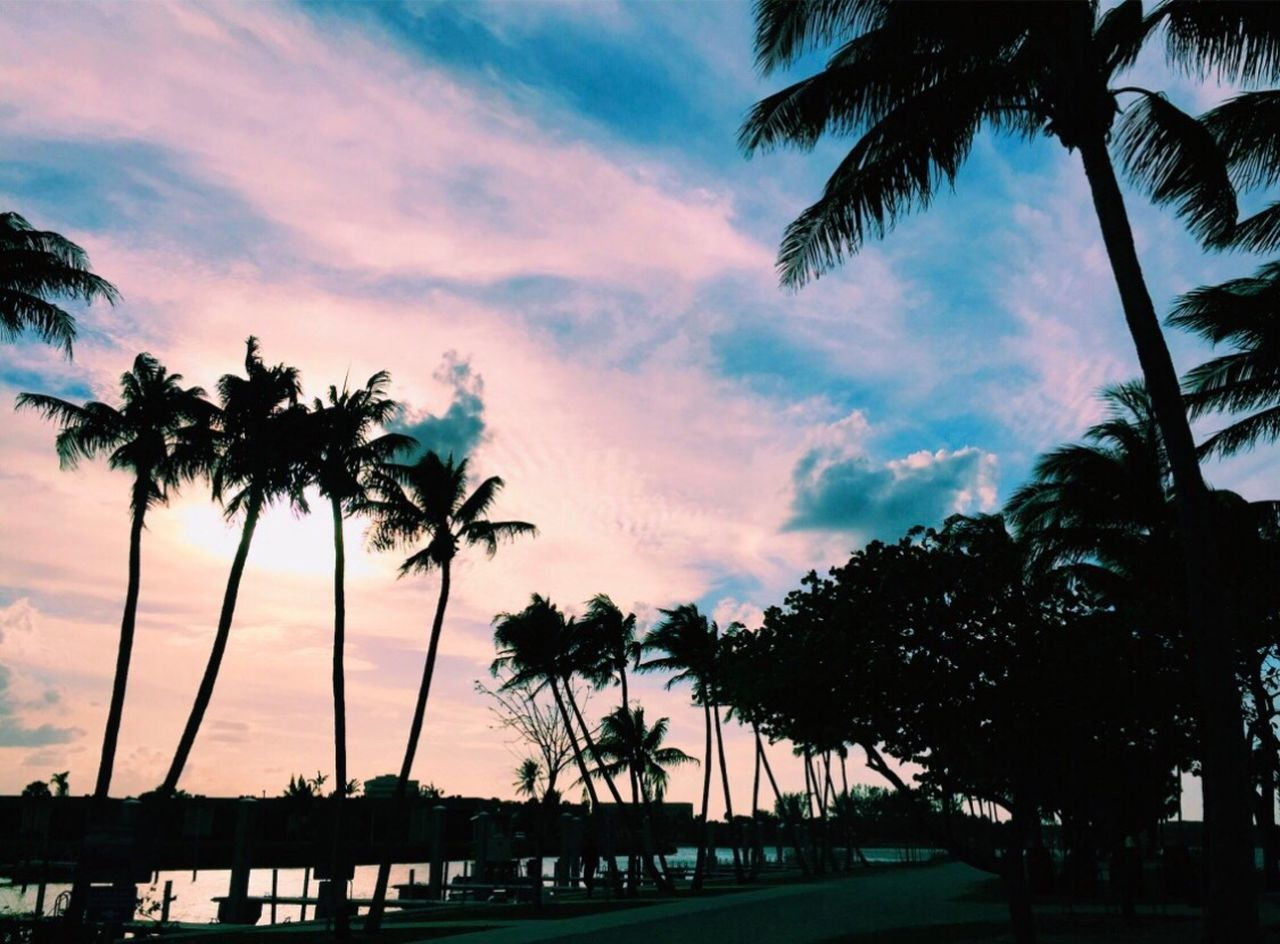 palm tree, tree, sunset, silhouette, sky, scenics, tranquility, beach, beauty in nature, tranquil scene, nature, sea, tropical climate, growth, water, tree trunk, palm frond, cloud - sky, no people, outdoors, tourist resort, travel destinations, swimming pool, tee, day