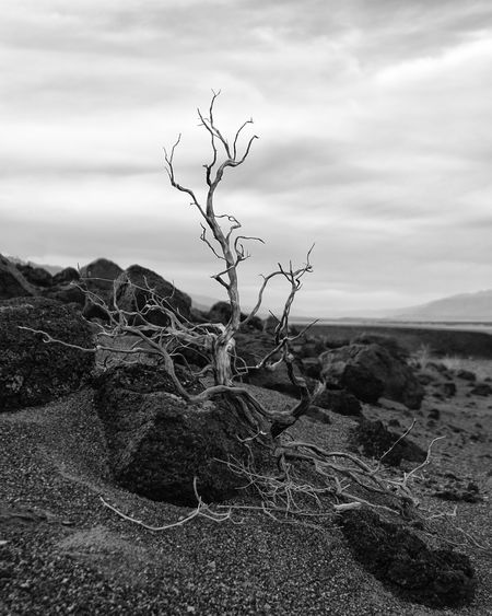 Potential. Sky Tranquility Nature Tranquil Scene Landscape Scenics Beauty In Nature Outdoors Remote Arid Climate Day Bare Tree Desert No People Close-up
