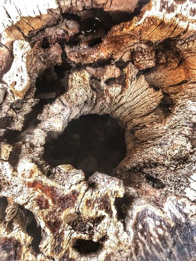 Agac Bosluk Day Rock - Object No People Sunlight Nature Textured  Outdoors Close-up Beauty In Nature Tree