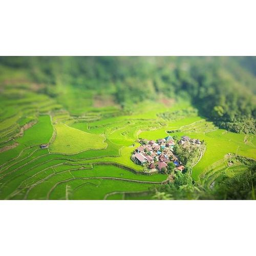 Tiltshifttheshitoutofthis Travel Destinations Outdoors Philippines BangaanRiceTerraces Rice Terraces Nature Banaue Rice Terraces Ifugao Beauty In Nature Landscape Green