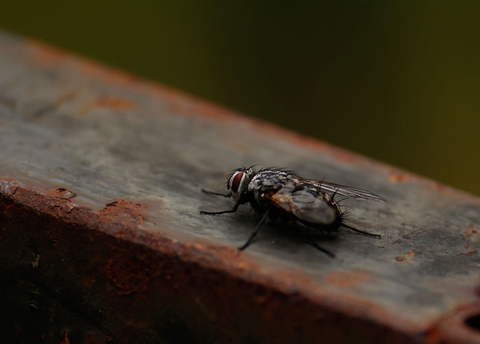 Close-up of housefly on fence