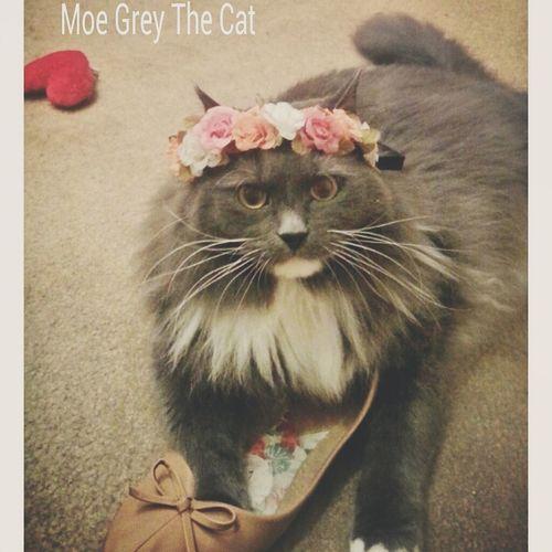If your a Catlover follow Moe Grey on FacebookPage  at www.facebook.com/moegreythecat to follow his adventures Hi! Mycat♥ Petsofeyeem Catsofinstagram Catsandflowers Catsandroses Cats Of EyeEm First Eyeem Photo