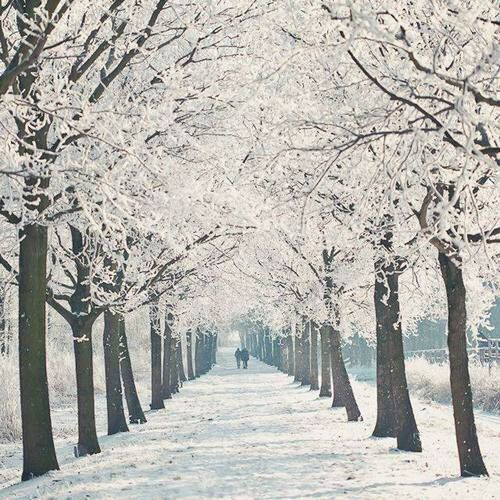 Winter Wintertime Cold Winter ❄⛄ Winter Trees