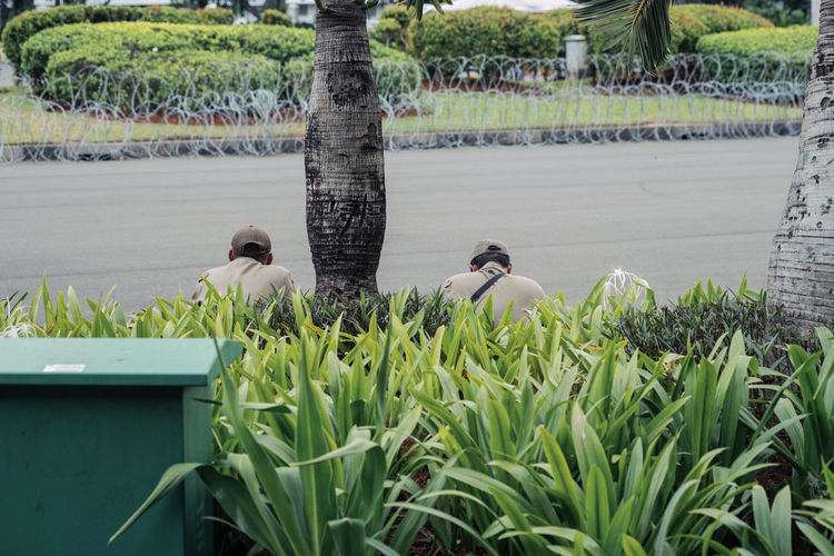 View of birds perching on plants