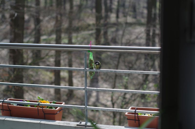 Close-up of bird perching on railing seen through window