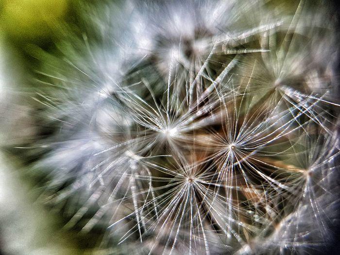 Backgrounds Full Frame Flower Close-up Exploding Softness Plant Life Flower Head Pollen Single Flower Sparks