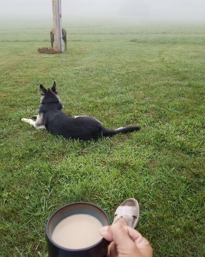Foggy morning vibes Coffee Foggy Morning Grass Low Section Pets Dog Human Hand High Angle View Grass Footwear Human Foot Shoe Human Leg Legs Crossed At Ankle Personal Perspective Sandal