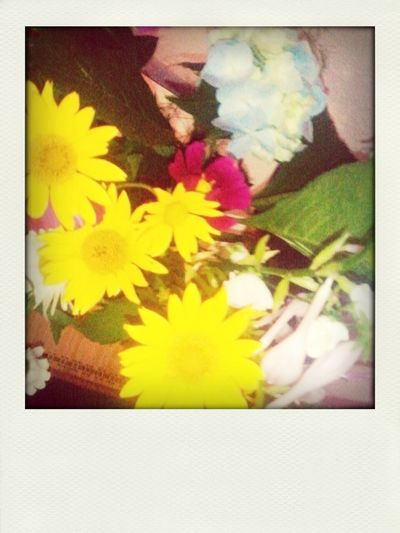 Подарили мне цветоочки