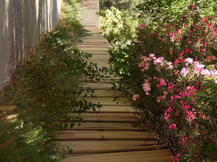 Boardwalk amidst flowering plants on sunny day