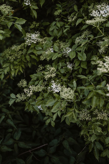 High angle view of white flowering plants