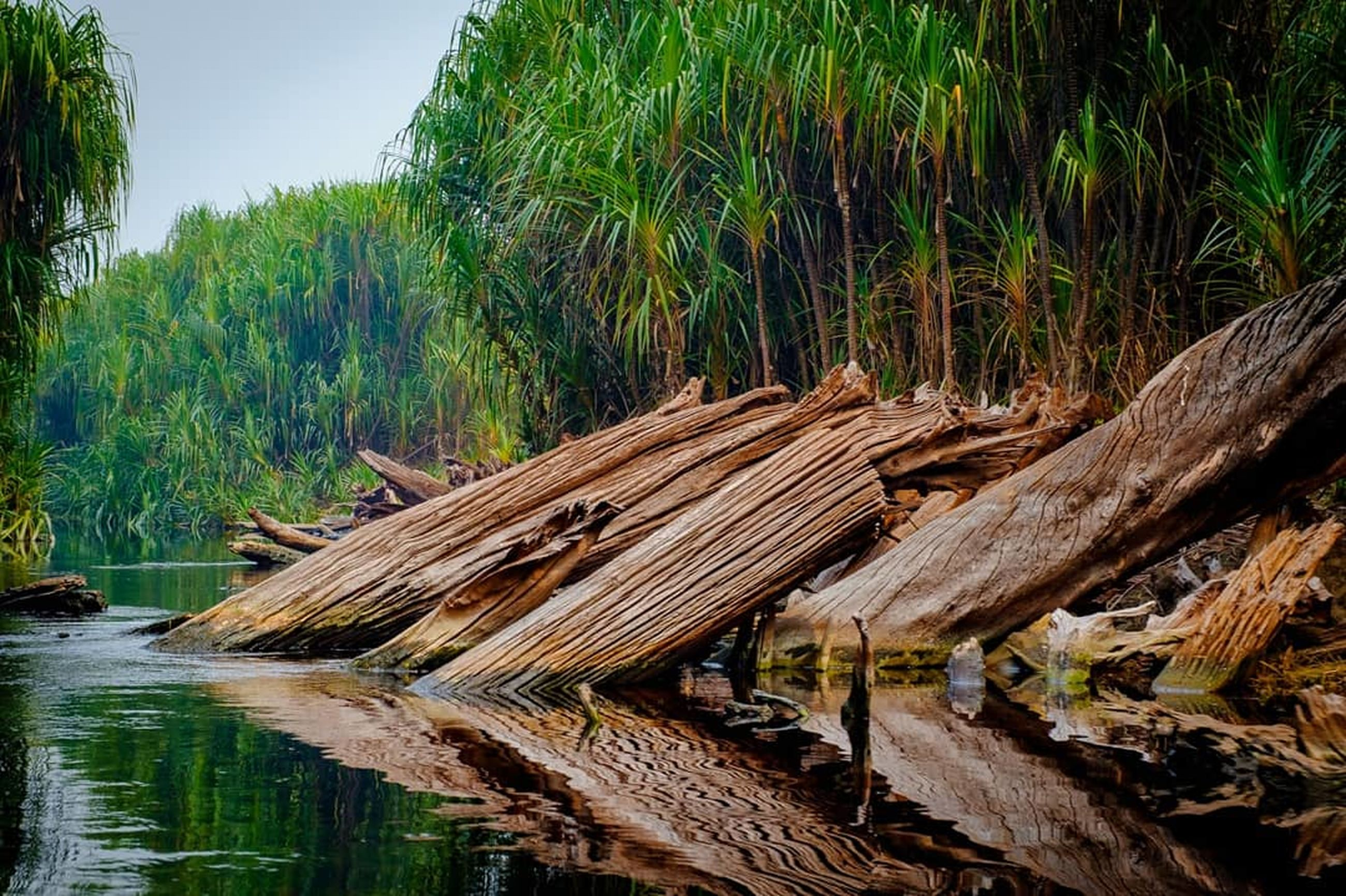 wood - material, plant, tree, water, nature, forest, no people, day, wood, lake, log, tranquility, timber, growth, land, outdoors, green color, tranquil scene