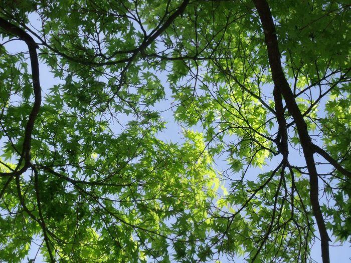 Hello World Morning Walk Taking Photos Green Green Green!  Japan Photography Warking♡ Enjoying Life EyeEm Best Shots Eye Em Nature Lover Tree_collection  Sky_collection