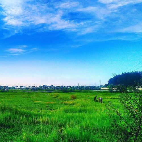 🍃🍃🍃 Grass Sky Bluesky Green Threes Nature View Likeforlike Like4like Goodview Goodangel Good Goodtime VSCO Vscocam Vscofilter Happy Awesome Great Mobilephotography Phonegraphy Xiaomi Redmi2camera Xiaomiphotography Mifanssemarang