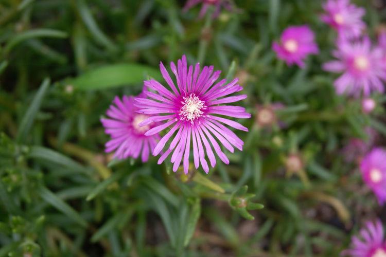 Blackpink ❤ Flower Pink Color Wildflowers