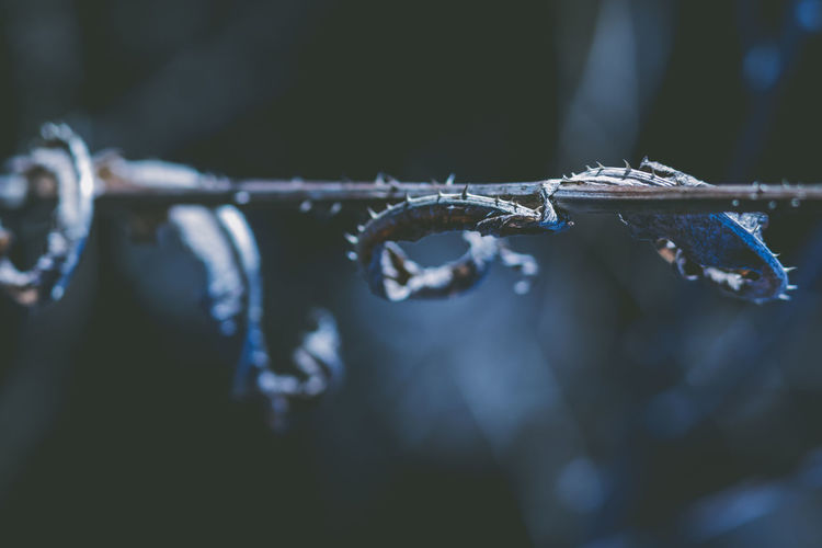 Close-up Focus On Foreground No People Winter Cold Temperature Nature Selective Focus Plant Ice Wet Twig Water Day Frozen Drop Outdoors Wire Barbed Wire Melting RainDrop Stick - Plant Part Icicle Dew