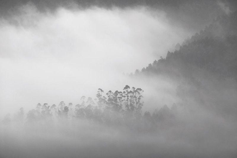 Morning. Black & White Ice Age