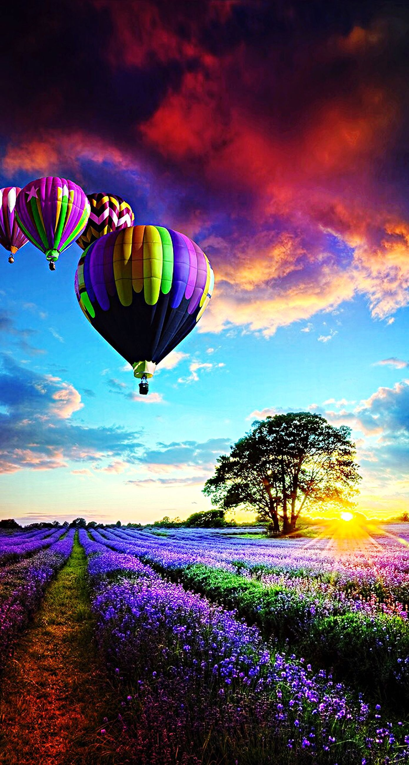 sky, cloud - sky, tranquil scene, multi colored, beauty in nature, tranquility, scenics, nature, cloud, landscape, mid-air, field, flying, cloudy, hot air balloon, sunset, low angle view, colorful, outdoors, purple
