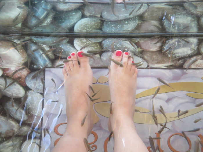 Low Section Of Woman Fish Pedicure In Spa