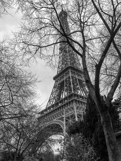 Eiffel Tour in a cloudy day Eiffel Tower♥ Eiffeltower Eiffel Tower Eiffel Tree Architecture Built Structure Low Angle View Bare Tree Travel Destinations Branch Connection History Day Travel No People Sky Outdoors Tower Bridge - Man Made Structure Nature Building Exterior