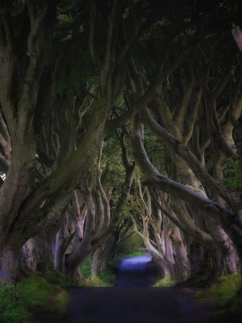 Tree Nature Tree Trunk Growth No People Outdoors Tranquility Tranquil Scene Scenics Day Beauty In Nature Landscape Branch Dark Hedges Creepy Spooky Spooky Trees