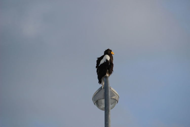 Low angle view of bird perching on pole
