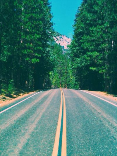Streetphotography Street Photography Art Nature Mountains Road Kings Canyon Nationalpark Vintage Summer Vacation Camping Forest Trees Beautiful Sunny Day