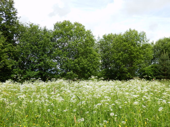 Scenic view of flowering trees on field against sky