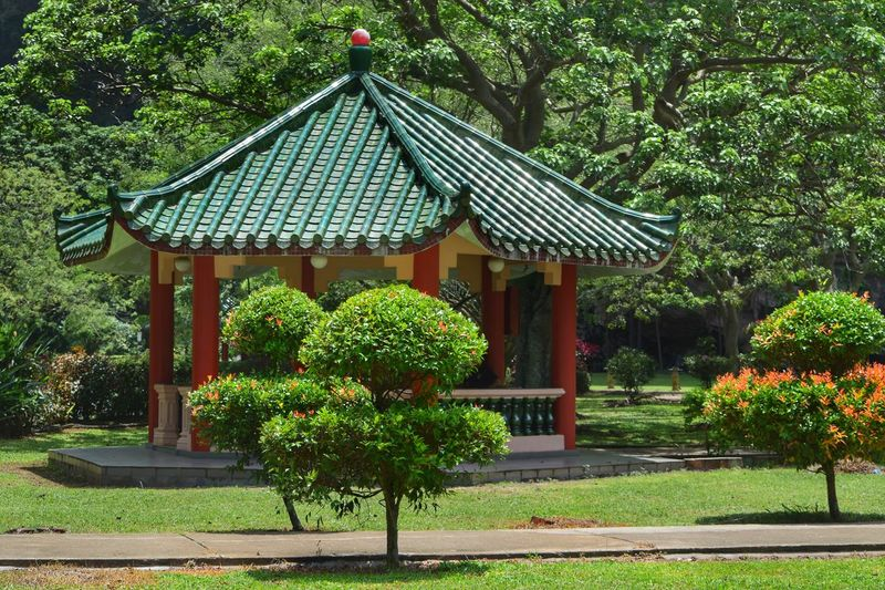 Tree Green Color Architecture Built Structure Outdoors Day Growth No People Building Exterior Beauty In Nature Nature Pagoda Trees Ipoh Malaysia Malaysia Scenery Green Topiary Sunny Day Sun Path Warm Clothing Tiled Floor Tiled Roof  Visit Ipoh