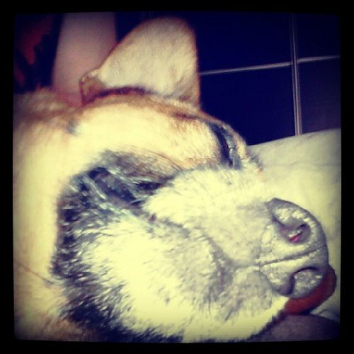 Gustaw Today Dog Love funny sweet
