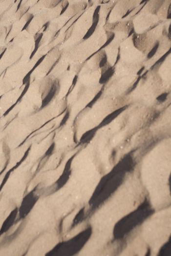 High angle view of bird on sand