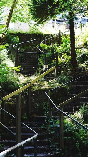 @slaleyhall Railing Steps And Staircases Tree No People Wood - Material Day Outdoors Nature