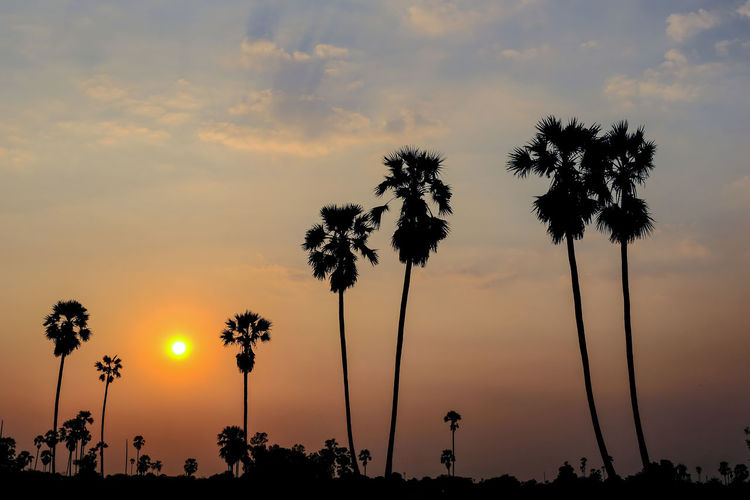 Silhouette Beauty In Nature Cloud - Sky Coconut Palm Tree Growth Idyllic Low Angle View Nature No People Orange Color Outdoors Palm Tree Plant Scenics - Nature Shadow Silhouette Sky Sunset Tranquil Scene Tranquility Tree Tropical Climate Tropical Tree