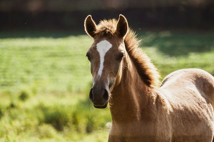 Close-up of a horse on a field