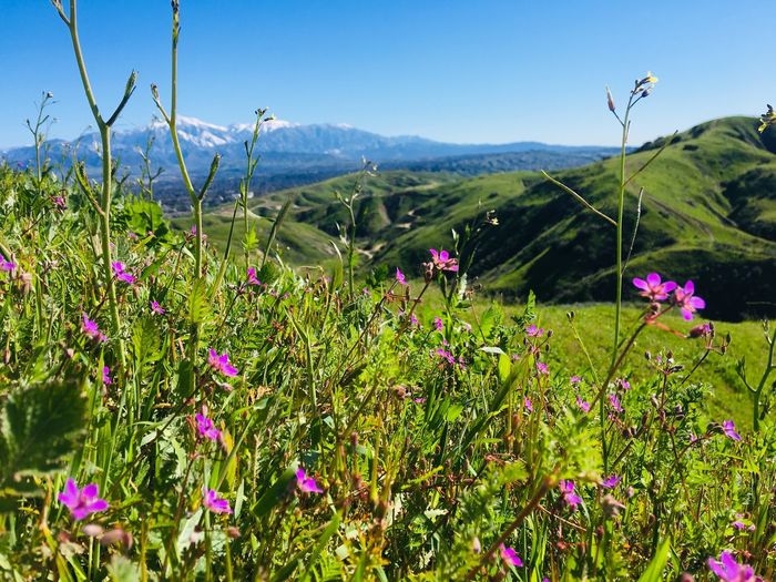 Snow Capped Mountains Plant Beauty In Nature Flower Flowering Plant Growth Sky Tranquility Nature Fragility Tranquil Scene Mountain Scenics - Nature Landscape Green Color Freshness