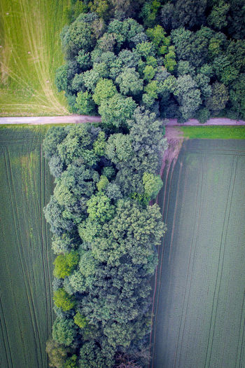 Plant Tree Growth No People Nature Day Green Color Beauty In Nature Outdoors Forest High Angle View Drone  Droneshot Greens GreenScenes EyeEmNewHere