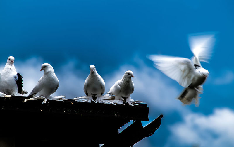 Low angle view of doves on roof against sky