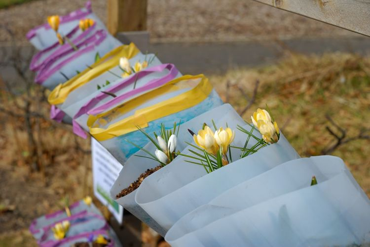 Bright Flowers Celebration Close-up Day Flower Flower Head Freshness Nature No People Outdoors Paper Plant Plant Pot