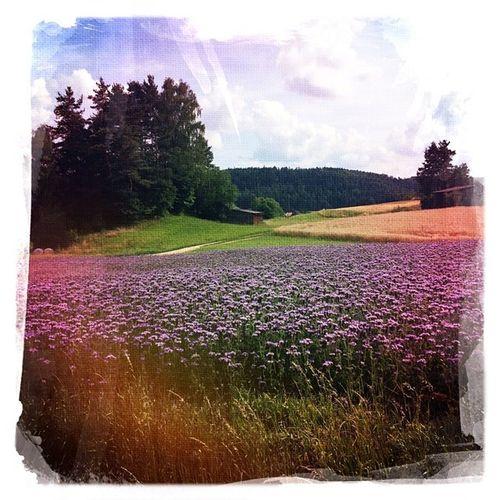 #field #hipstamatic