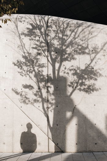 Shadow Sunlight Plant Nature One Person Tree Day Real People Focus On Shadow Unrecognizable Person Branch Wall - Building Feature Architecture DDP - DongdeamunDesignPlaza Concrete Capture Tomorrow 17.62°
