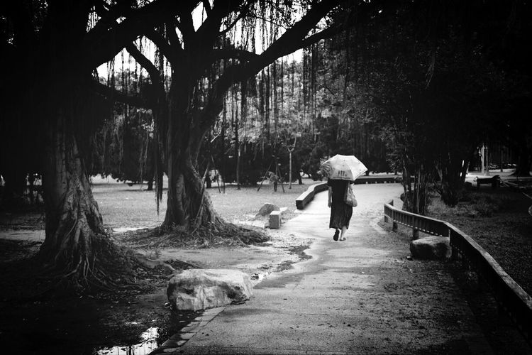 Full length rear view of woman with umbrella walking on garden path