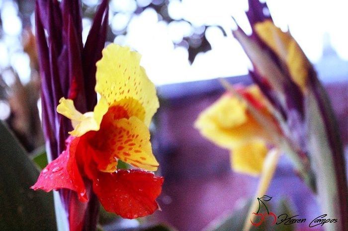 🌷 Flower Beauty In Nature Petal Karen Campos