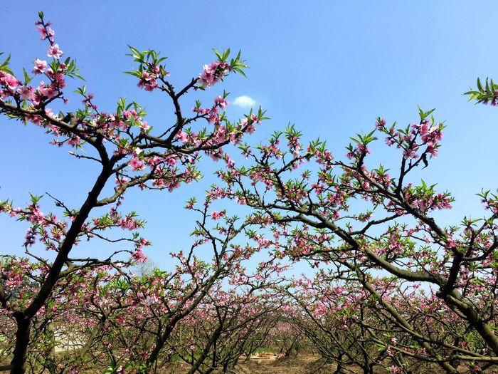 Tree Trees OpenEdit Flowers Landscape Grove
