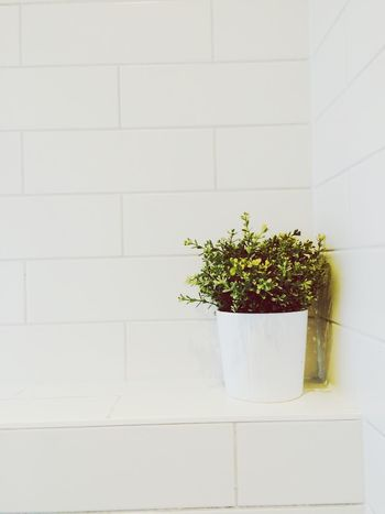 White OpenEdit Overlighting Exposure Plant Stones Toilet Green In House Houseplants Nature Inspiring Ghent Gent Belgium No People Interior Interior Design
