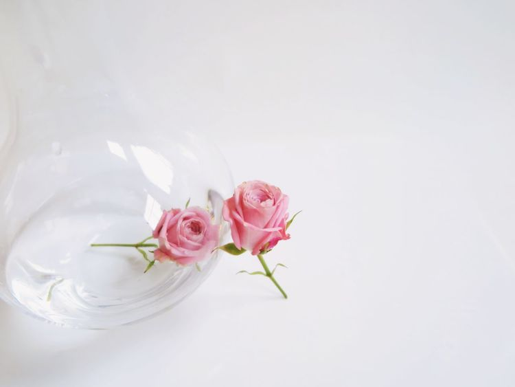 Beautiful Couple Emotions Love Pink Pink Rose Romantic Beauty Bottle Bottles Day Flower Flower Head Fragility Freshness Nature Roses Separated Separation Still Life Studio Shot Togetherness Togheter Water White Background EyeEm Ready   EyeEm Ready   AI Now Love Yourself Visual Creativity